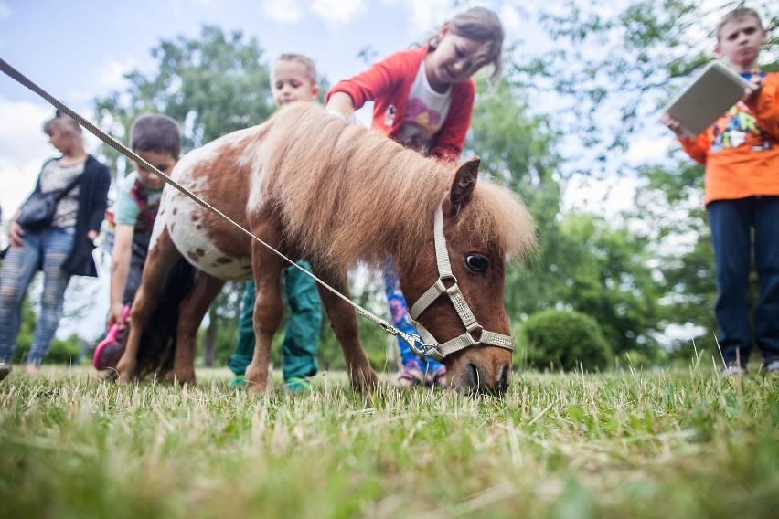 Konie odwiedziły małych pacjentów ICZMP w Łodzi [ZDJĘCIA]