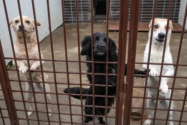 Psy bezdomne oraz wałęsające się po terenie gminy są odławiane i trafiają do bydgoskiego schroniska (zdjęcie poglądowe).