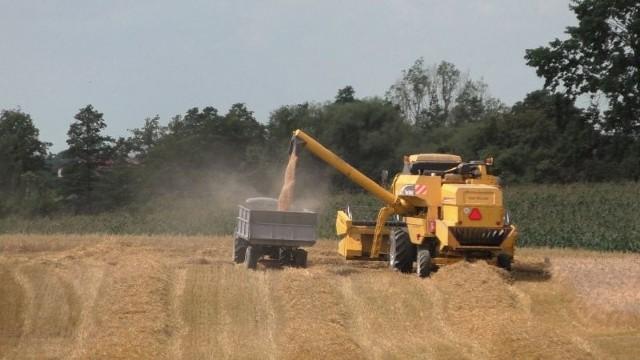 To już kolejny rok, w którym rolnicy ponoszą straty z powodu suszy. W tym sezonie problemy gospodarzy pogłębiły upały