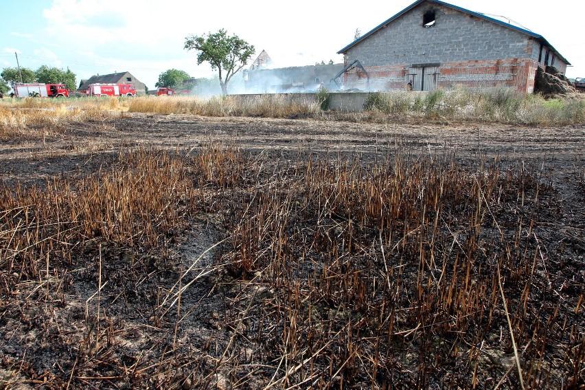 Powiat świecki. Spaliło się 20 hektarów zboża [zdjęcia]