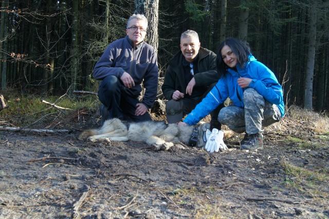 Wilczyca Jaga schwytana w lasach suchedniowskim była pierwszym świętokrzyskim wilkiem, któremu założono obrożę. Na zdjęciu od lewej: profesor Roman Gula, Artur Milanowski, Marzena Milanowska.
