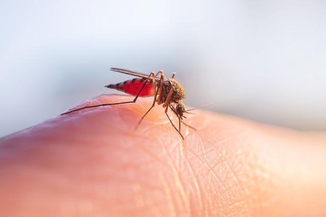 Po co nam komary (i dlaczego byłoby źle, gdybyśmy zabili wszystkie)?