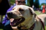 Radni zaznaczyli na pomarańczowo psie odchody w parku Wilsona. Chcieli zwrócić uwagę właścicieli czworonogów na sprzątanie po pupilach