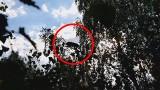 Tajemniczy zwierz biega przy trasie Ustka-Słupsk [wideo]