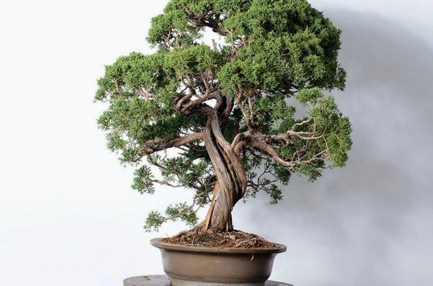 Jak Wybrać Donice Do Drzewek Bonsai Radzi Sebastian Czekaj
