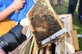 Miejska pasieka w Rzeszowie. Na osiedlu Zwięczyca pół miliona pszczół będzie robić miód dla mieszkańców