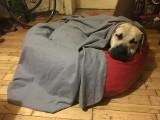 Poznań: Mężczyzna, który zaatakował psa gazem pieprzowym, zatrzymany przez policję [WIDEO]