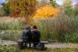 Piękna jesień w krakowskim ogrodzie botanicznym. Zobacz te zdjęcia!