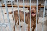 Białystok. Schronisko dla zwierząt znów jest otwarte dla gości i wolontariuszy. 150 psów czeka na nowy dom! (ZDJĘCIA)