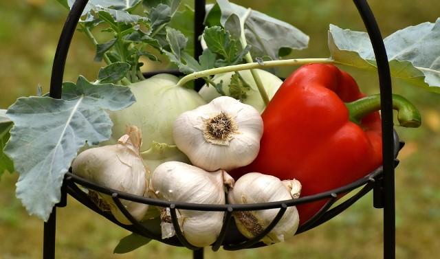 Jeśli zamierzacie uprawiać warzywa albo owoce bez stosowania syntetycznej chemii, poznajcie kilka prostych sposobów na pozbycie się chorób i szkodników. Co prawda niektóre z tych zabiegów należy wielokrotnie powtarzać, ale systematyczna praca daje wspaniałe efekty. Pozytywnie wpływa także na środowisko