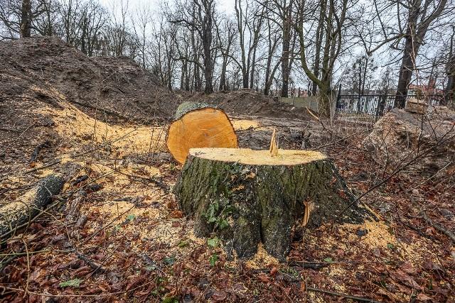 Z terenu dawnego Parku Steffensów w Gdańsku, w miejscu w którym w przyszłości ma powstać akademik i niewielki biurowiec, wycięto 10 drzew