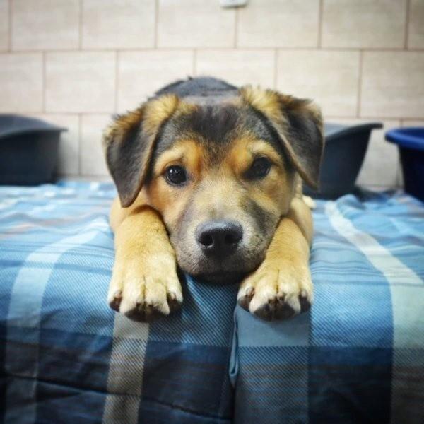 Sato trafił do schroniska w styczniu, mając ok. 5 miesięcy. Jest to średniej wielkości, spokojny piesek, który potrzebuje czasu i cierpliwości, żeby zaczął merdać ogonem i rozdawał całusy. Jest odrobaczony, zaszczepiony, zaczipowany i wykastrowany.