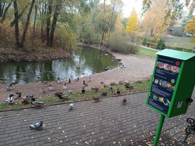 Ptasie bufety mogą stanąć w Dąbrowie Górniczej i Sosnowcu. Nakarmimy kaczki w parkach bezpiecznym dla zwierząt pokarmem. Zobacz kolejne zdjęcia - przesuń zdjęcia w prawo. Wciśnij strzałkę lub przycisk NASTĘPNE