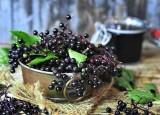 Czarny bez na odporność. Jak zrobić sok i syrop z czarnego bzu? Właściwości lecznicze, zastosowanie i przeciwwskazania