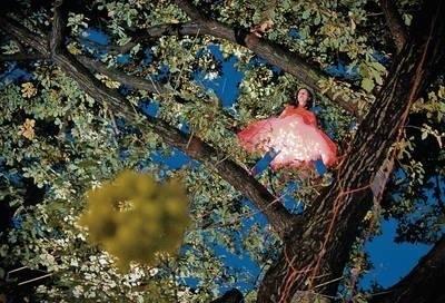 Cecylia Malik weszła na 365 drzewo Fot. Kamila Zarembska