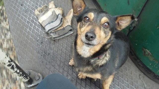 Pies Gutek z likwidowanej kopalni w Sosnowcu