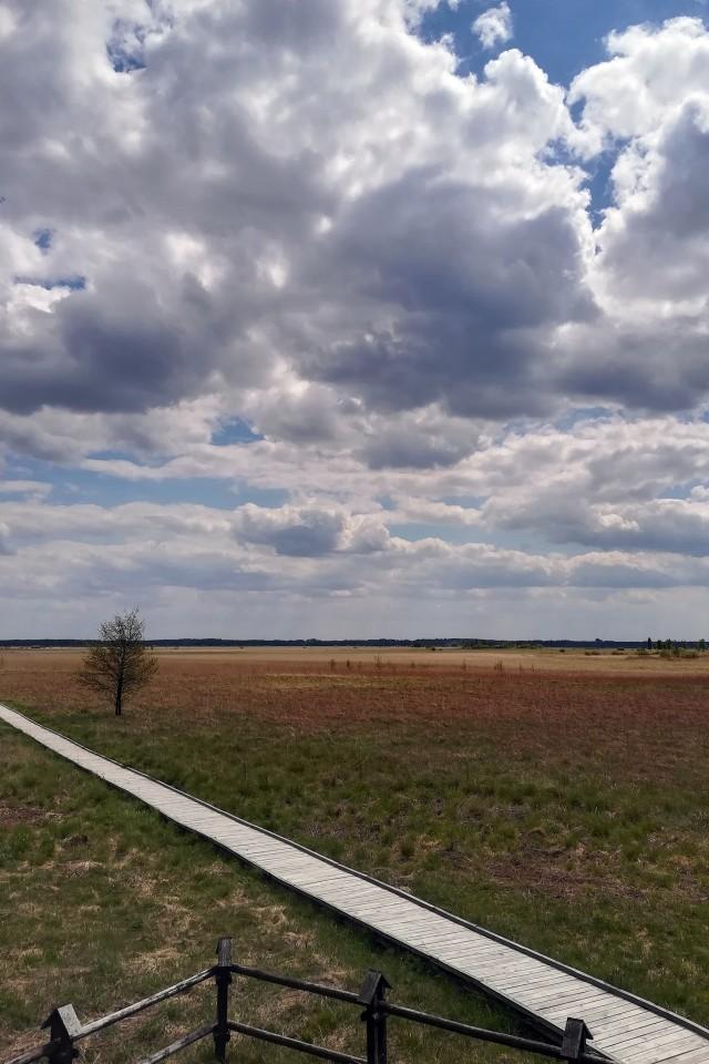 """Ścieżka """"Czahary"""" w Poleskim Parku Narodowym prowadzi przez tereny Bagna Bubnów. Dzięki drewnianym kładkom możemy poznać niezwykłe tajemnice torfowisk"""