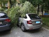W Radomiu wielki konar drzewa zwalił się na samochód osobowy, na pomoc ruszyli strażacy
