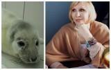 Kto zabija foki na Pomorzu? Znana pisarka, Maria Nurowska oferuje nagrodę za pomoc w znalezieniu zabójców fok