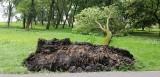 Lublin. Po niedzielnej ulewie ucierpiały drzewa w Parku Ludowym. Zobacz zdjęcia