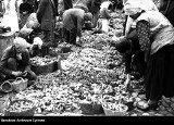 Kiedyś to były grzyby. Nie tylko w lasach, ale i na ulicach! Urodzajne zbiory na archiwalnych zdjęciach