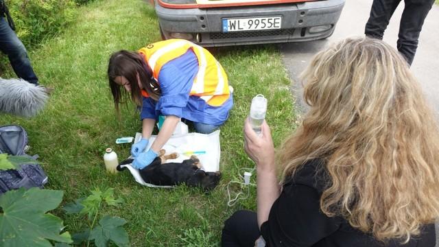 Pies z odgryzionym fragmentem szczęki, martwy szczeniak, zasuszone zwłoki w klatce. To obraz jaki zastał sztab policji i animalsi podczas interwencji w schronisku w Radysach