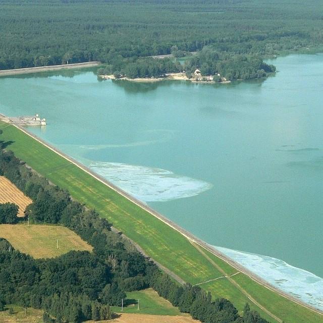 Od kilku dni plaże nad jeziorem dużym opanowała prawdziwa inwazja sinic. W wodzie musiał wzrosnąć poziom fosforanów, zawartych m.in. w proszkach do prania.