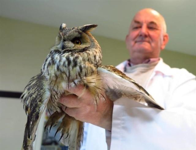 Rannego ptaka na swoim podwórku znalazł przedwczoraj, 14 marca, mieszkaniec Skierniewic, który postanowił ją przywieźć do piotrkowskiej lecznicy.