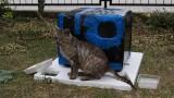 Dzieci ze Skierniewic zaopiekowały się chorym kotkiem Frankiem