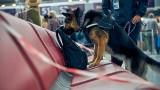 Psy w Polsce będą wykrywać chorych na COVID-19. Spotkacie je w galerii i na lotnisku. Zastąpią tradycyjne testy?