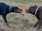 Spór o psi wybieg na Niskich Łąkach. Czy stanie tam płot?