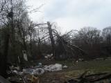 Katastrofa pod Smoleńskiem. Dwa tygodnie po tragedii tupolewa. Tak wyglądała ścięta brzoza i tor nalotu (zdjęcia)