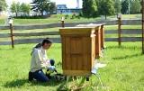 Z miejskiej pasieki w Rzeszowie zebrano pierwsze 30 litrów miodu [ZDJĘCIA]