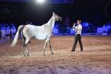 Aukcja w Janowie Podlaskim. Na Pride of Poland 2019 wylicytowano 14 koni za 1 mln 396 tys. euro. Kwota zadowalająca, choć mogła być wyższa