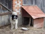 Cyrk bez zwierząt i zakaz trzymania psa na łańcuchu. Będzie nowe prawo
