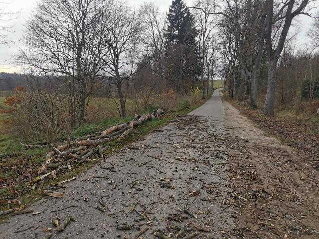 Wiatr łamie drzewa w gminie Połczyn-Zdrój