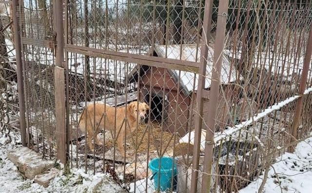 Na podwórku jednego ze gospodarstw, w małym zamkniętym kojcu, żyje w makabrycznych warunkach pies.