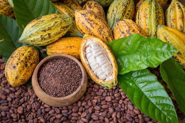 Kakao stało się europejskim przysmakiem dopiero za sprawą wypraw Hernando Corteza, który sprowadził je na hiszpański dwór w pierwszej połowie XVI wieku.
