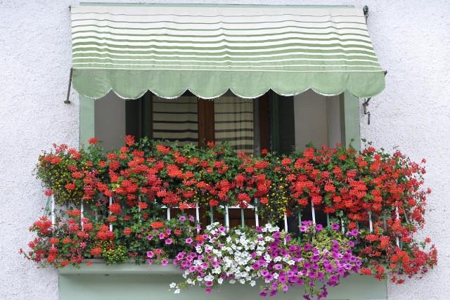 Sadząc kwiaty na balkonie, pomyślmy też o tym, jak będzie wyglądał balkon sąsiadów poniżej. Zobaczcie, jakie kwiaty warto sadzić, a jakich unikać.