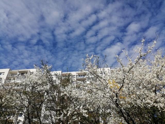 Morena cała w bieli, jak kwitnący ogród…