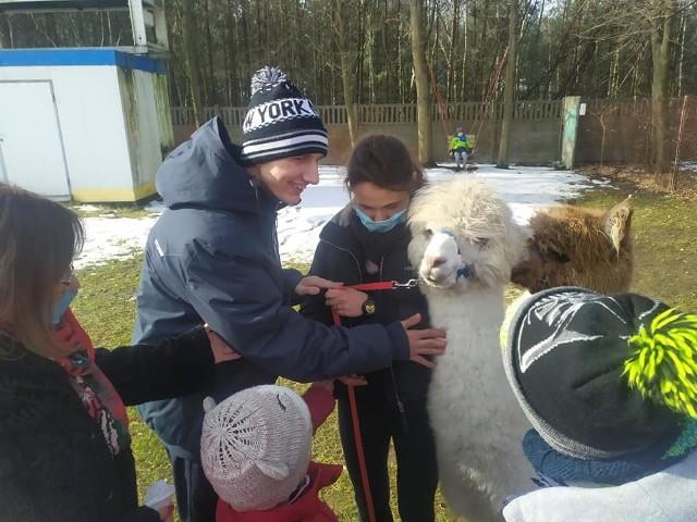 Alpaki regularnie odwiedzają dzieci ze szkoły w Adamowie. To okazja do zabawy, ale też rehabilitacji.