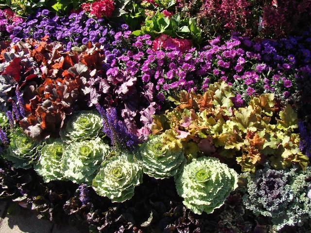 Późne lato i jesień może być pełne kolorów i kwiatów. Zobacz, jakie kwiaty ozdobią ogród u schyłku lata i dłużej.