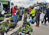 Wiosenne ożywienie na giełdzie w Sandomierzu. Sadzonki, truskawki, różności i tłum klientów. Zobacz zdjęcia