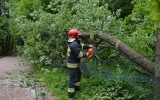 Mocno wiało. Strażacy usuwali powalone drzewa