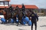 Straż miejska. Szkolili się jeźdźcy i konie [galeria zdjęć]
