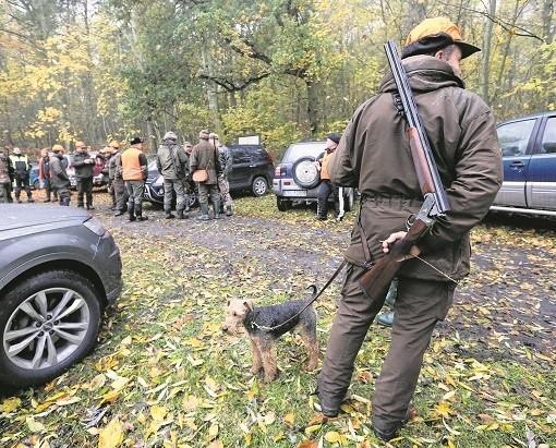 W okolicy Oświęcimia myśliwi idący ze strzelbami i psami, to częsty widok, szczególnie w weekendy. Mieszkańcy zaczynają się ich bać, bo polują zbyt blisko domów i miejsc, gdzie chodzą na spacery