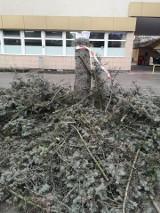Wycięto trzy drzewa na osiedlu Kmity w Rzeszowie. Mieszkańcy: Kto na to pozwolił? [ZDJĘCIA]
