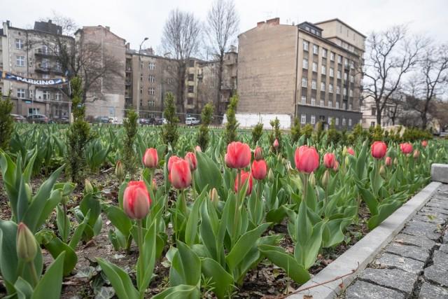 Na placu Biskupim zakwitły tulipany, ale końca przebudowy tego miejsca nadal nie widać. Jest natomiast spór o niezapłacone pieniądze za wykonane prace.