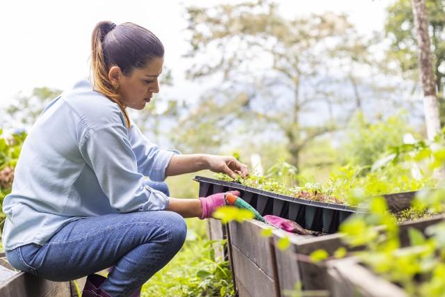 Październik to czas sadzenia kwiatów cebulowych. Ale roślin, które warto w tym miesiącu posiać lub posadzić jest znacznie więcej. Oto one.