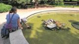 Palmiarnia Łódź.  Żółwie na wakacjach w fontannie